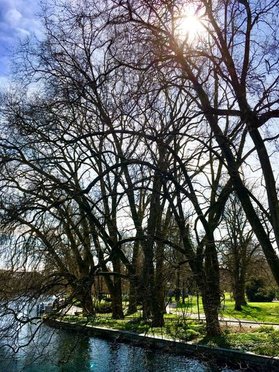 Bare Tree Beauty In Nature Day HDR Nature No People Outdoors Sky Sun Sunlight Tree Water
