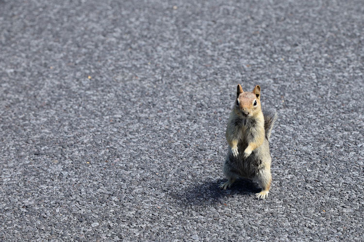 High angle view of squirrel on road