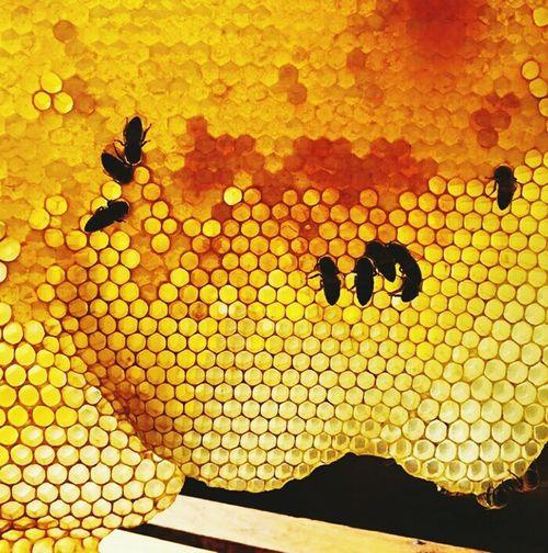 Backgrounds Nature Outdoors Close-up Bees Beehive Geometric Shape Symetry Beautifully Organized EyeEm Best Shots EyeEm Nature Lover EyeEm Best Shots - Nature EyeEm The Best Shots Eyeembestsellers