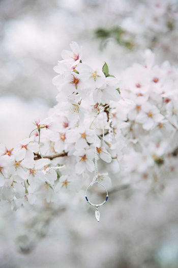 Necklace in cherry blossom Freshness Flower Plant Springtime Growth Blossom Cherry Blossom Cherry Tree Close-up Branch Jewelry Hippie Wild Wanderlust Japanese Cherry Blossoms Necklace Springtime Decadence