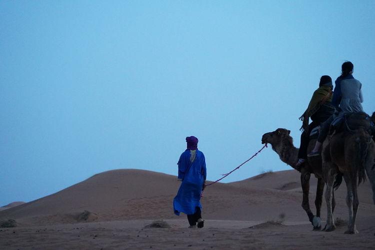 Camel trip The Great Outdoors - 2018 EyeEm Awards The Traveler - 2018 EyeEm Awards Morocco Photos Sahara Desert Sahara Day Morocco_travel Camel Riding Camel Journey Travel Morocco 🇲🇦 Adventure Sand Dune Desert Riding Sand Landscape Outdoors Streamzoofamily