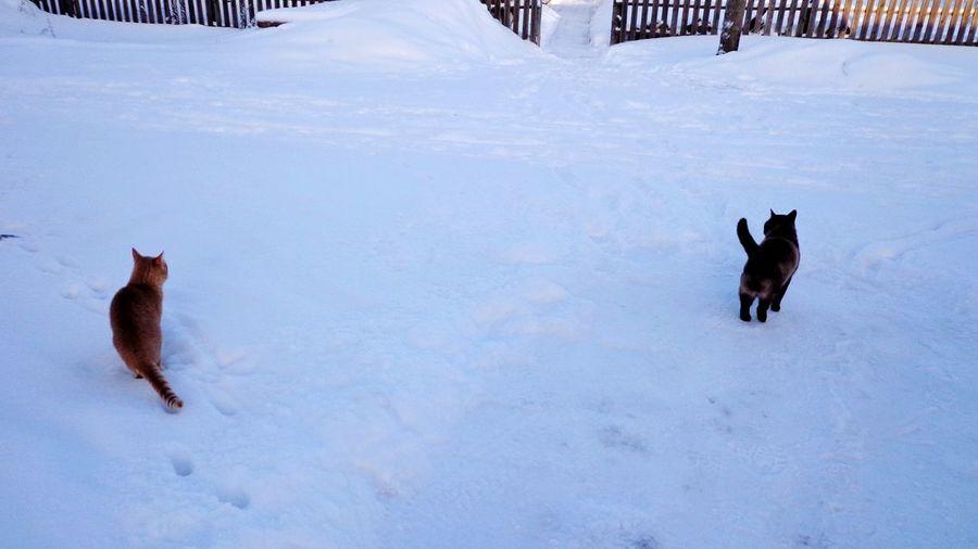 Dog on snow covered landscape