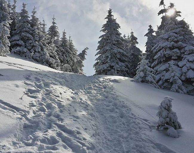 Staledokopca Tesim_sa_na_vyhlad Makamdalej Orava Slovakia Velkychoc Cesta_na_velky_choc Wintertree Winter Výlet