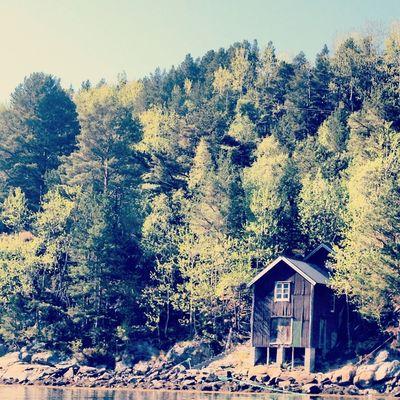 Nature Landscape Trees EyeEm Nature Lover