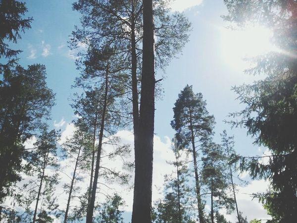 лес и природа