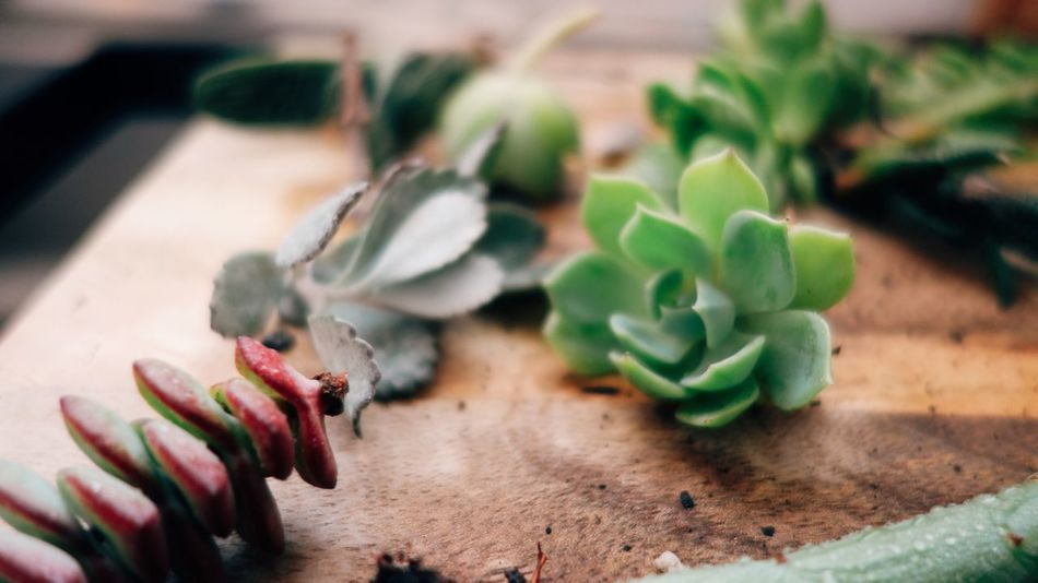 Plants Apartment Gardens Garden Succulents Indoors  Table Green Color Food And Drink Freshness Food Wood - Material Leaf No People Close-up