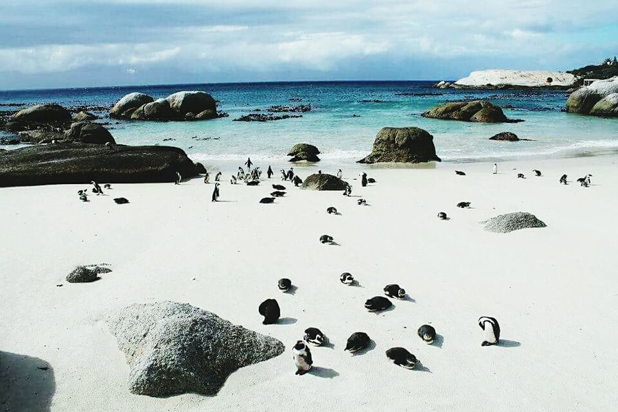 Spettacolo Natura Photooftheday First Eyeem Photo Photography Autentic Moments Sudáfrica Viaggio Pinguini