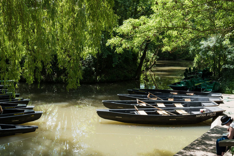 Marais Poitevin Beauty In Nature Green Color Moored Nature Nautical Vessel Rowboat Scenics - Nature Tree Water