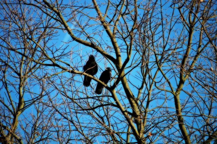 Birds Animals In The Wild Animal Themes Tree Animal Wildlife Bird Branch Bare Tree Low Angle View Perching Clear Sky Nature Togetherness Lovely Nature_collection Nature Photography Animal Photography Bird Photography Idyllic Harmony Scenics - Nature Relaxing Moments Snapshots of Life Sky Beautiful Nature