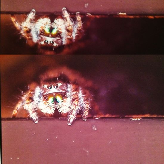 SpiderMac Spider Lifegiant, IAmNikon, Nikon First Eyeem Photo