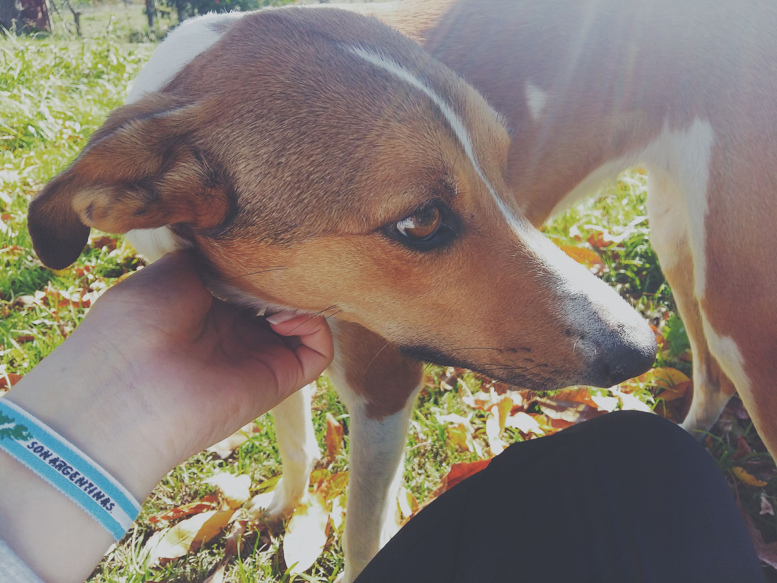 dog, pets, human hand, domestic animals, human body part, animal themes, one animal, mammal, one person, day, real people, close-up, outdoors, people