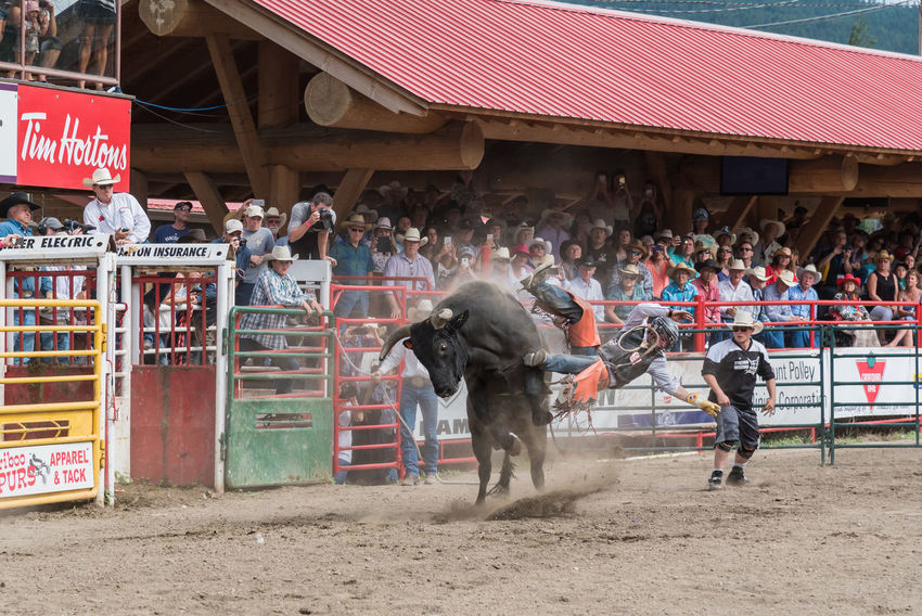 Williams Lake, British Columbia/Canada - July 2, 2016: bull throws cowboy into the air at a bull riding competition during the 90th Williams Lake Stampede, one of the largest stampedes in North America 90th Williams Lake Stampede Arena British Columbia, Canada Bull Cariboo Chilcotin Cowboy Rodeo Travel Action Arena Audience Bucking Bull Bull Riding  Danger Documentary Editorial  Extreme Sport Outdoors RISK Sport Stampede Stampede Grounds Stands Thrown Tourism