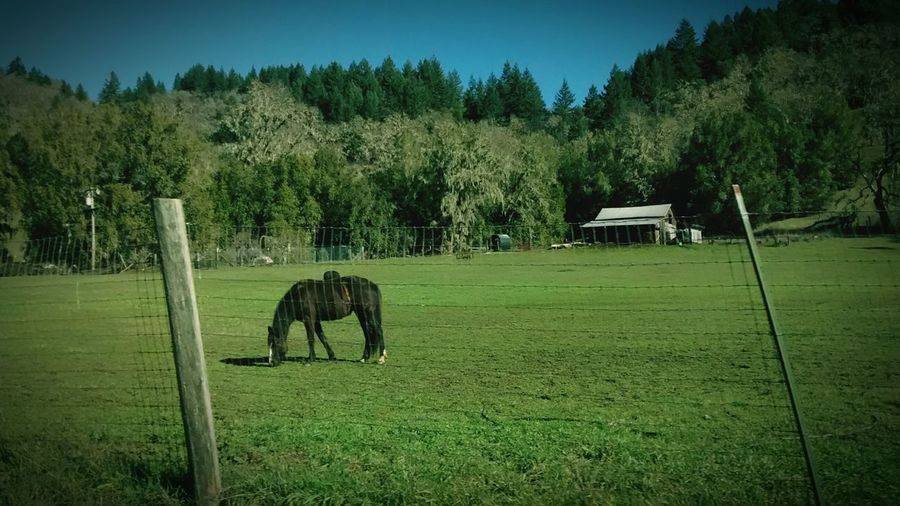 Countryside Photorama Wonders Willits California Countryside Country Living <3 Equestrian Horses <3 Equestrian Country Life Taking Photos Check This Out Hanging Out Enjoying Life Hello World