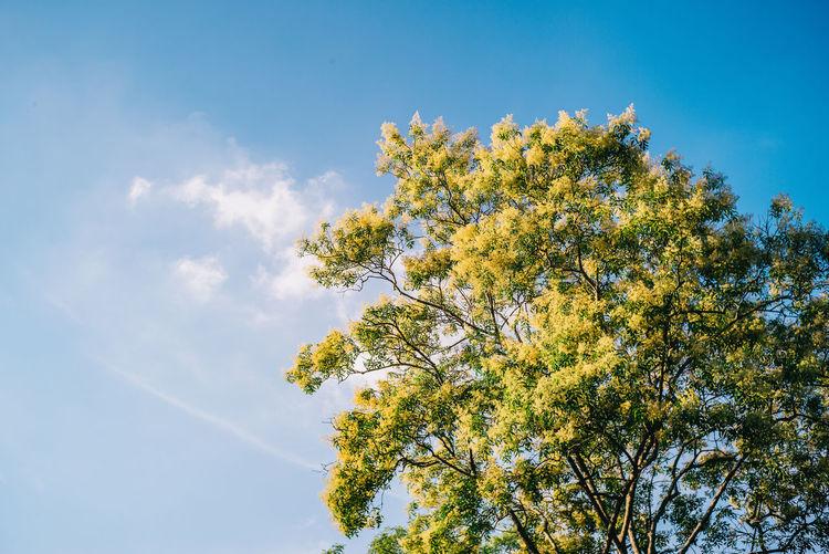 Tree Flower Blue Sky Close-up Plant