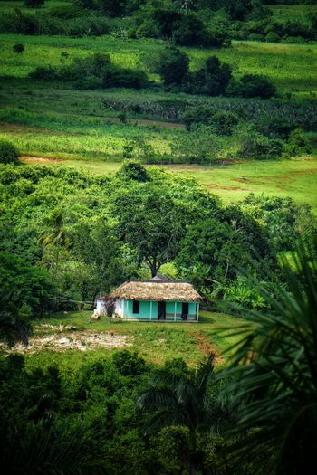 Valley of Viñales Cuba Paradise Farmland Farm Life Nature Nature_collection Nature Photography Naturelovers Naturephotography Nature_perfection Tree Water Agriculture Field Architecture Grass Built Structure Green Color Plant Country House Agricultural Field Green Greenery Flora Vegetation Cultivated Land Countryside Hay Bale Farmland Grassland