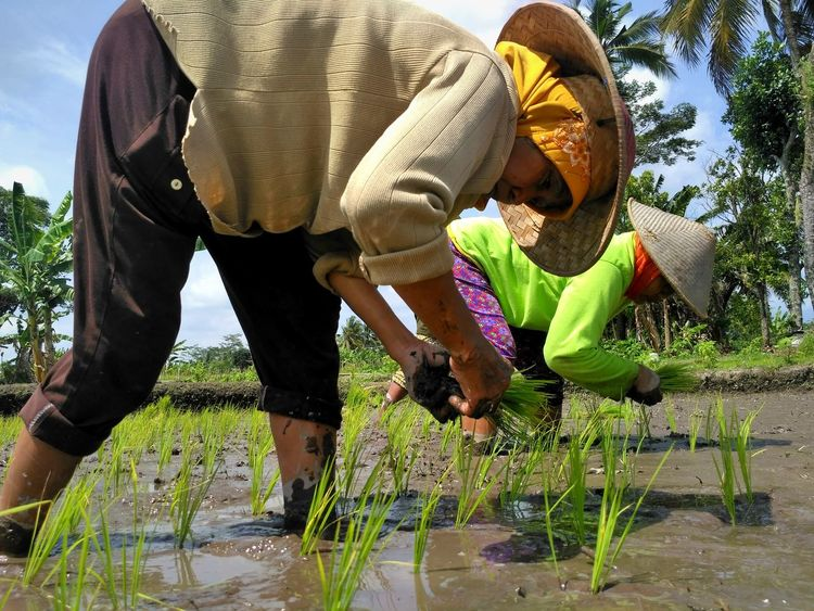 Finding New Frontiers 12DaysofEyEm TheWeek On EyEem Low Section Adults Only Outdoors Day Leisure Activity Beauty In Nature Agriculture Plant Nature Low Angle View Woman Portrait Padyfield Ricefields Phoneography Phonegraphy_indonesia