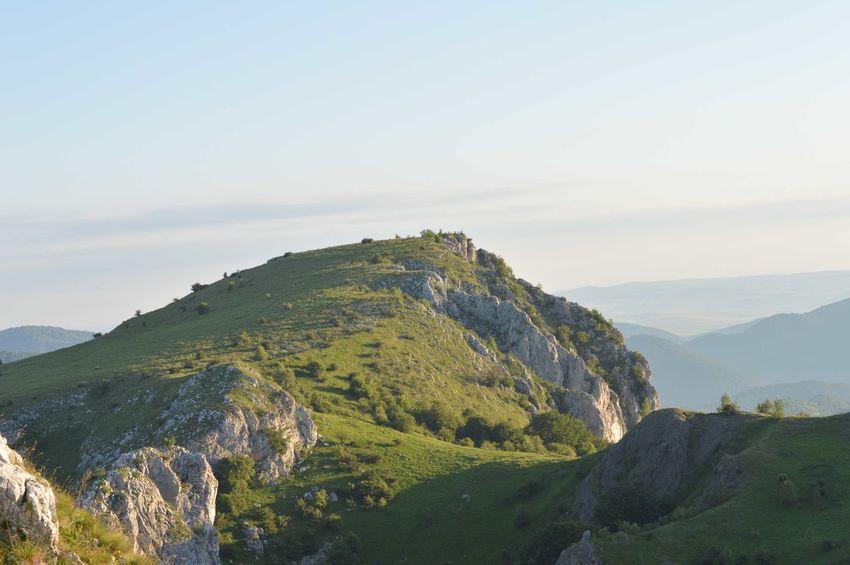 Hills Tea Crop Forest Mountain Range Valley Mountain Ridge