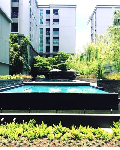 Architecture Window Building Exterior Growth Plant Built Structure Day Water Outdoors No People Swimming Pool Nature The Secret Spaces