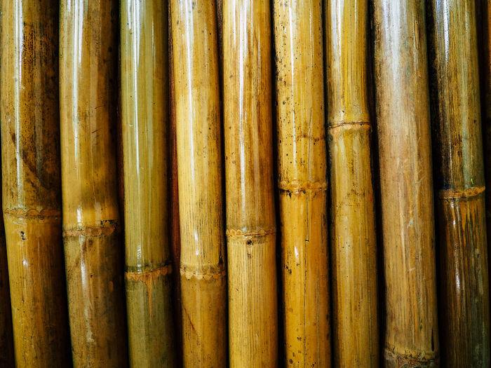 Close-Up Of Bamboo