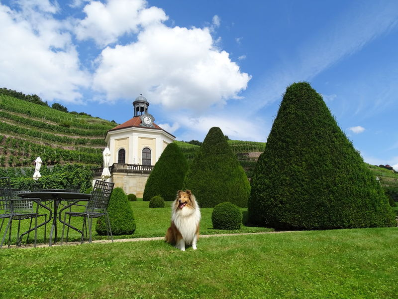 Wackerbarth Animal Themes Architecture Building Exterior Built Structure Cloud - Sky Collie Dog Domestic Animals Grass Mammal Nature One Animal Outdoors Pets Place Of Worship Religion Schloss Wackerbarth Sitting Sky Spirituality Tree