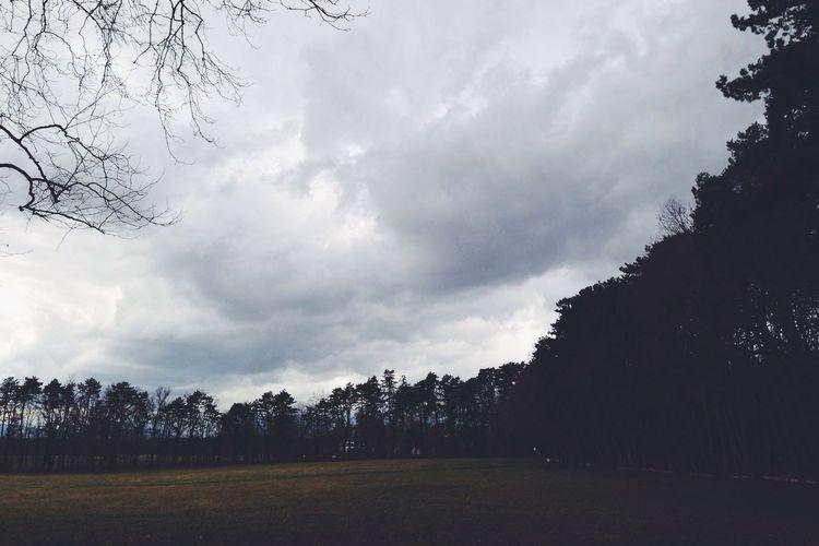 Park Tree Clouds