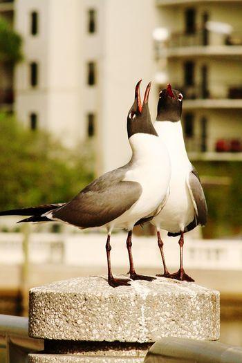 Bird Photography Bird Birds Birds_collection Birds Of EyeEm  Seagull Beautiful Nature