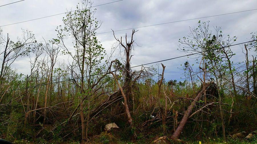 Hurricane Michael 2018 Hurricane Bird Technology Perching Sky Animal Themes Grass Cloud - Sky