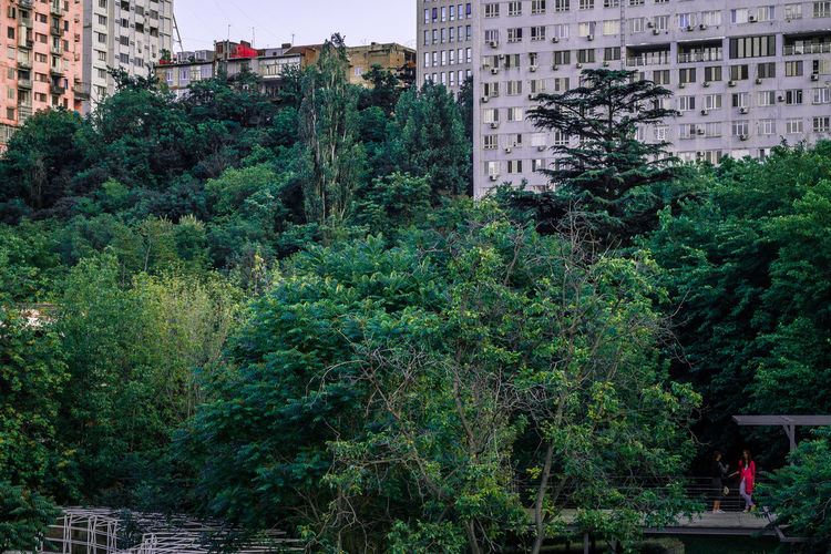 Trees and plants growing in city against buildings