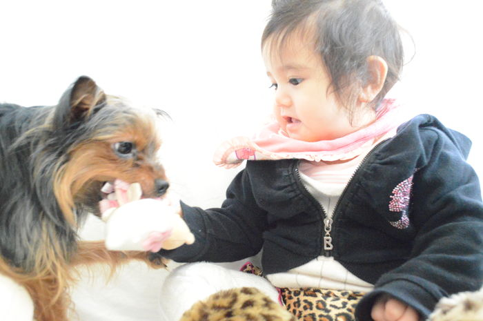 Niece & puppy Nikon D3200 Nikon 日本 Eyeem4photography Nikonphotography Nikontop EyeEm Eye4photography  EyeEmBestPics EyeEm Best Shots EyeEm GalleryPets Dog One Animal Cute Dog And Baby Dog Love Childhood One Person Baby Brasil Japan Yorkshire Jackrussell Mix