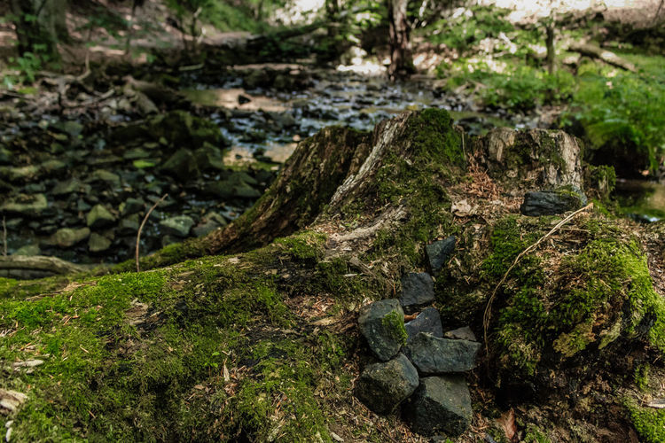 In the forest Beauty In Nature Close-up Day Focus On Foreground Forest Grass Green Green Color Growing Growth Idyllic Moss Nature No People Non Urban Scene Non-urban Scene Outdoors Plant Rock Rock - Object Scenics Tranquil Scene Tranquility Tree Tree Trunk