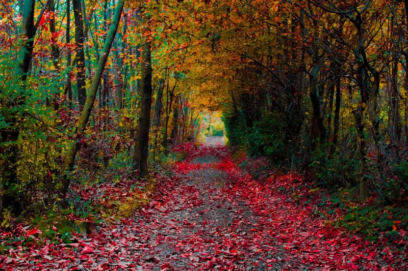 Wood Autumn Change Leaf Nature Beauty In Nature Tree Forest Multi Colored Tranquility Non-urban Scene WoodLand Tranquil Scene No People Outdoors Growth Day Branch The Way Forward Scenics Freshness