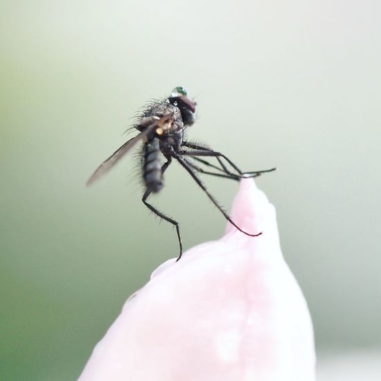 Close-up of fly on hand