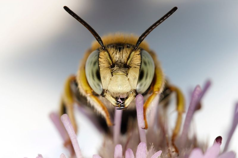 Extreme Close-Up Of Bee On Purple Flower