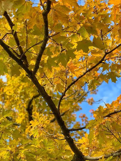 Tree Plant Yellow Beauty In Nature Autumn Branch Plant Part Growth Leaf Nature Day Sunlight Sky