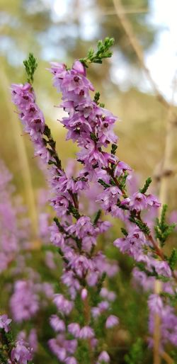Flower Head Flower Pink Color Water Purple Branch Close-up Plant Sky Wildflower Botany