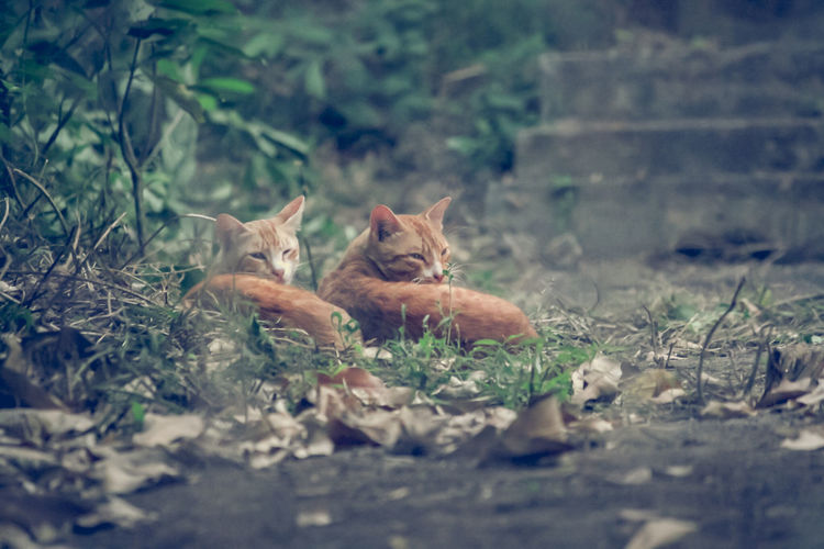 #Nature #Cats