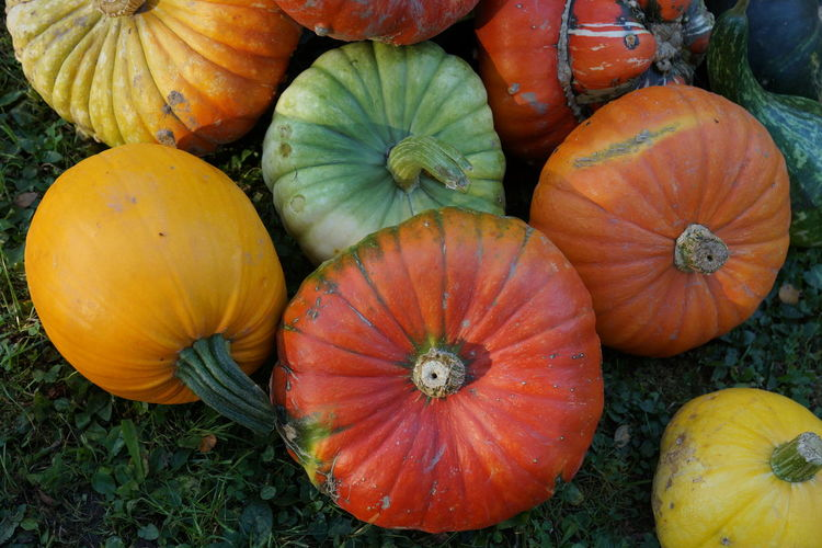 Food Food And Drink Pumpkin Vegetable Healthy Eating Freshness Wellbeing Orange Color No People High Angle View Close-up Day Still Life Nature Outdoors Large Group Of Objects Market Agriculture Field Variation