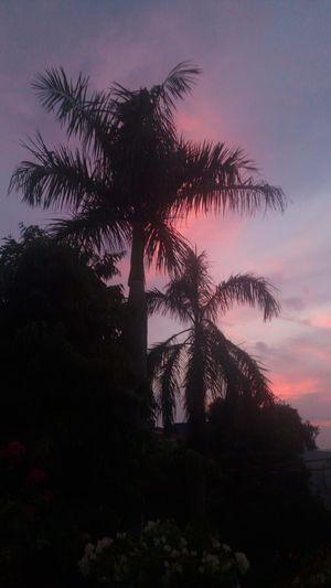 An Evening in