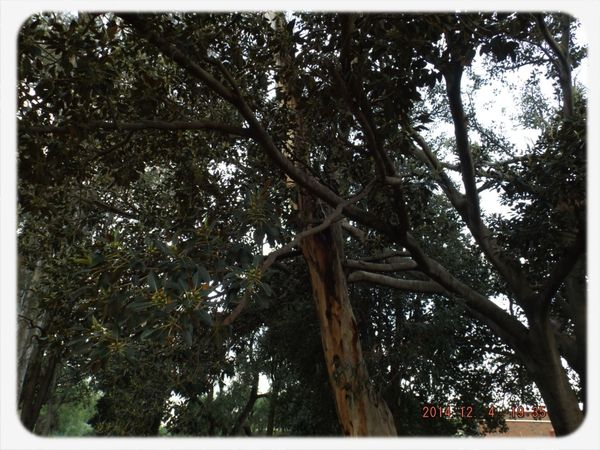 Tree Tree And Sky I like trees;-)