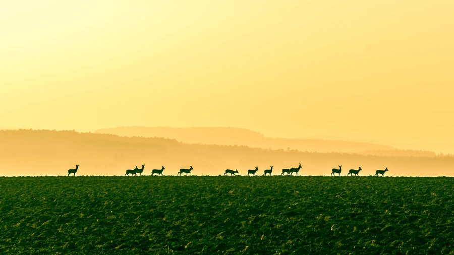 View of deers on field during sunset
