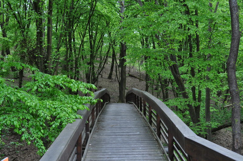 Beauty In Nature Bridge - Man Made Structure Day Footbridge Forest Green Color Growth Lush Foliage Nature No People Outdoors Plant Railing Scenics The Way Forward Tranquil Scene Tranquility Tree Water