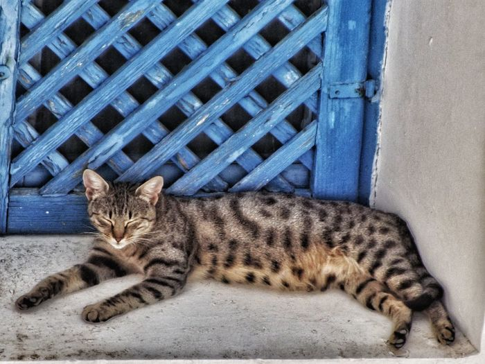 A beautiful Santorini cat Domestic Cat One Animal Domestic Animals No People Tabby Cat Close-up Creative Light And Shadow Color Photography Nature And Wildlife By Tony Bayliss Malephotographerofthemonth Portrait Close Up Nature Cats Of EyeEm Cats 🐱 Catoftheday Santorini Cats