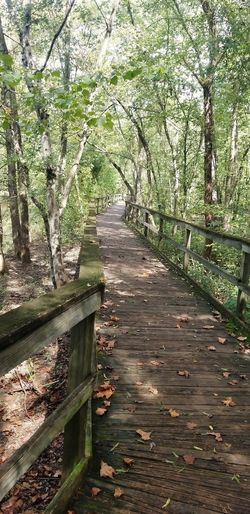Wooden trail @ Glen Hilton Tree Sunlight Wood - Material Leaf Sky Grass