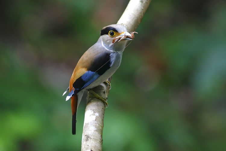 Animal Bird Animal Themes Vertebrate Animal Wildlife Animals In The Wild One Animal Perching Focus On Foreground Close-up Day No People Nature Outdoors Tree Branch Plant Looking Beak Beauty In Nature