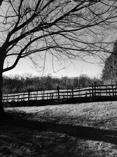 Old orchard at Mt Vernon First Eyeem Photo Rustic Beauty Historic Virginia
