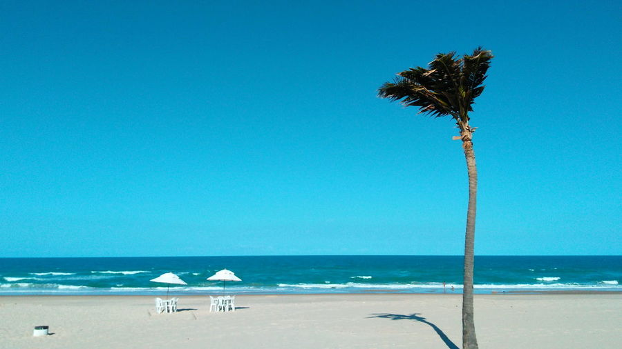 Beach Blue Calm Clear Sky Coast Day Horizon Over Water Hot Weather Lonely Palm Tree Lonely Tree Nature Outdoors Palm Tree Resort Hotel Sand Scenics Sea Shore Summer Tide Tranquility Tree Vacations Water Wave