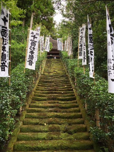 Temple Moss Mossy Green Stairs Plant Nature No People Tree Outdoors Architecture Green Color Growth