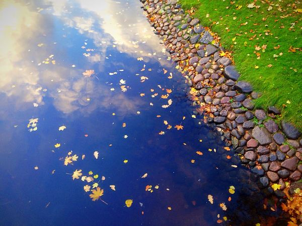 Озеро листья желтые листья Water Reflection Nature Day Tranquility Pebble Waterfront Fallen Abundance Blue Leaves Full Frame Surface Level Outdoors Standing Water Tranquil Scene Beauty In Nature Water Surface Large Group Of Objects No People