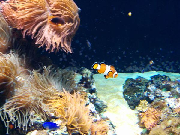 Fish Sea Sealife Sealifeaquarium Aquarium Nemo