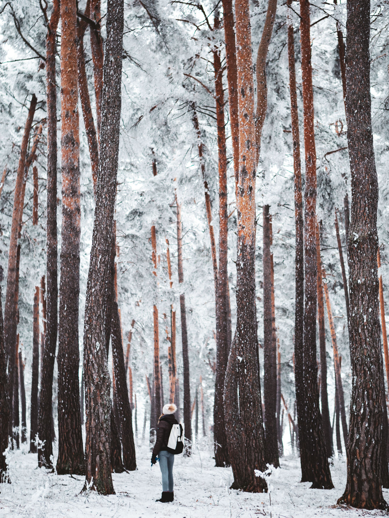winter, snow, cold temperature, tree, forest